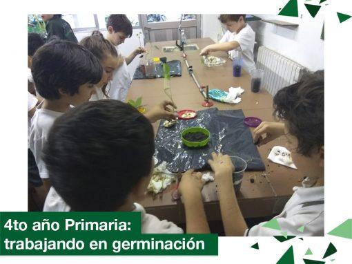2018: 4to año Primaria trabajando en germinación