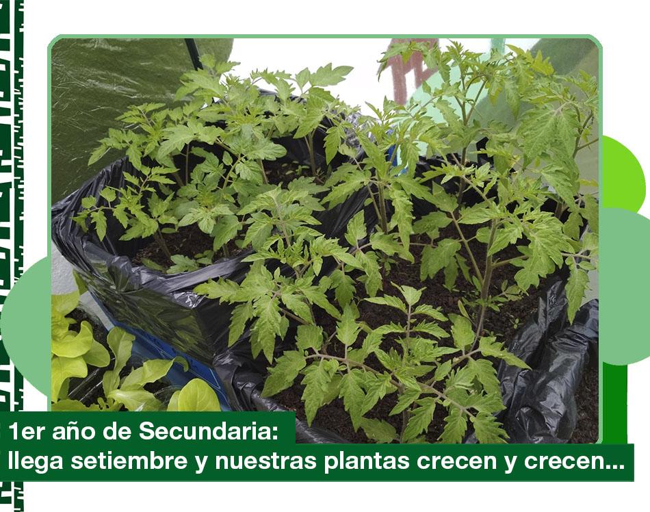 Setiembre 2019. Nuestras plantas crecen y crecen…