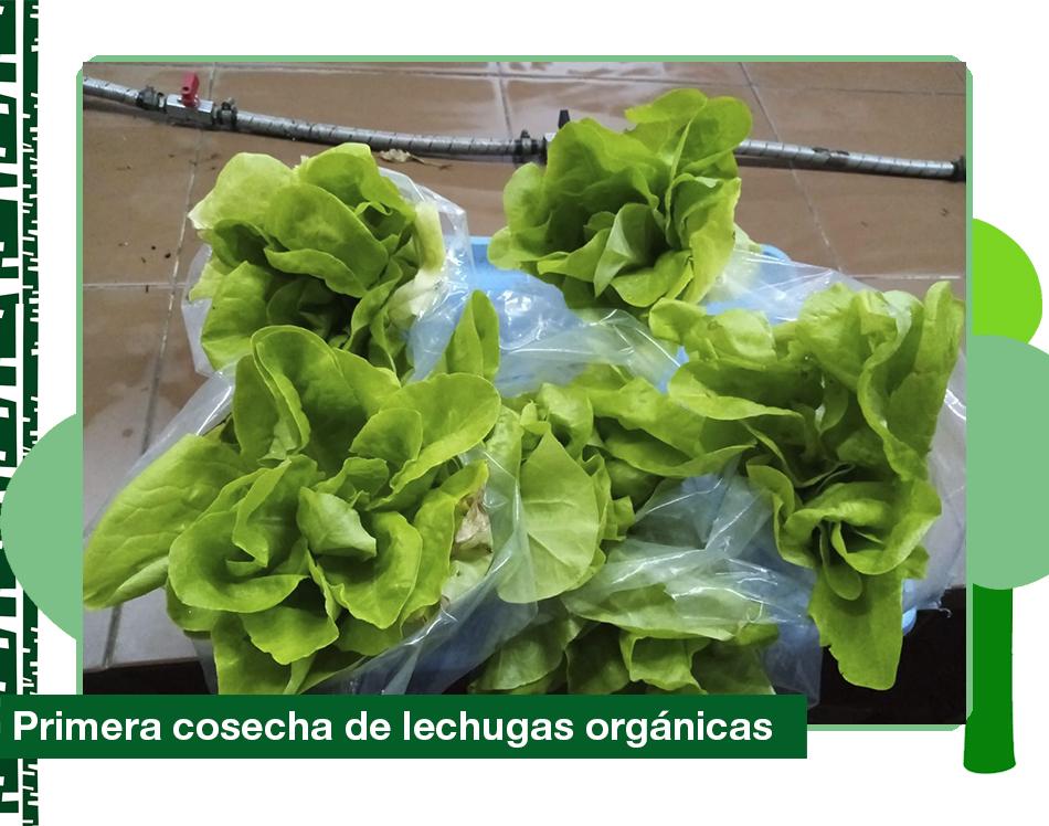 2019: Taller de huerta orgánica, primera cosecha de lechugas