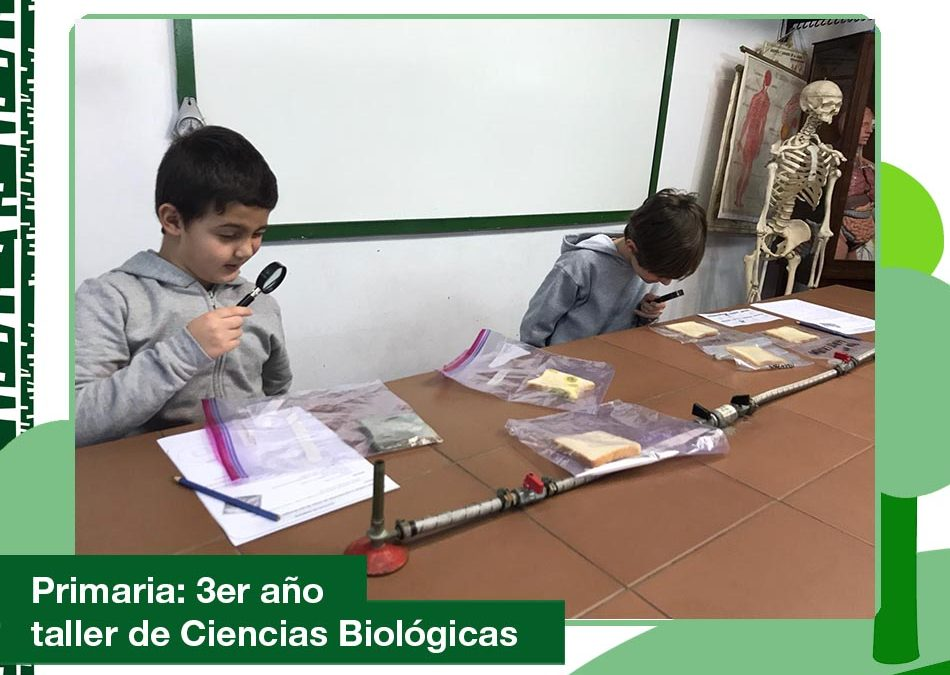 2020: 3er año Primaria en el Taller de Ciencias Biológicas.
