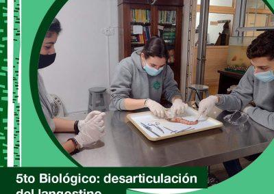 2021. 5to Biológico: desarticulación de un langostino.